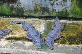 at the Crocodile Park