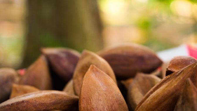13 Pili Nuts