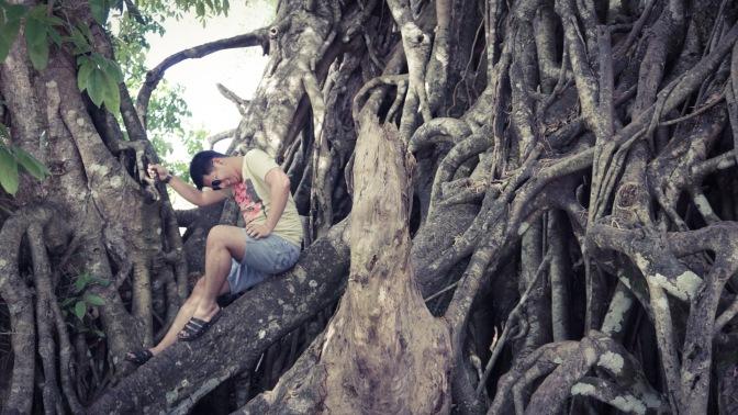 34 Millenium Roots