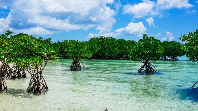 37 Buntod Island Mangroves