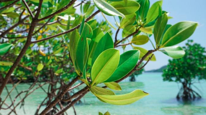 38 Buntod Island Mangrove